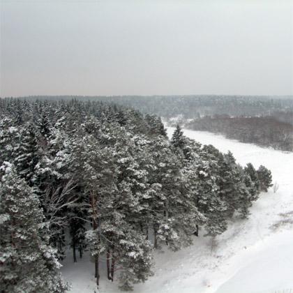 зимние полеты рядом с лесом в подарок на новый год